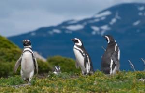 patagonia istock (1)