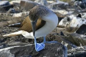 Galapagos istock (2)