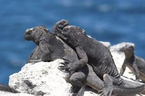 Galapagos istock