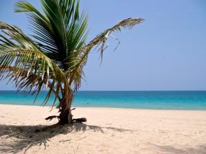 Beach Palm