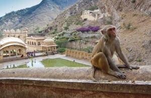 The Monkey Temple, Jaipur