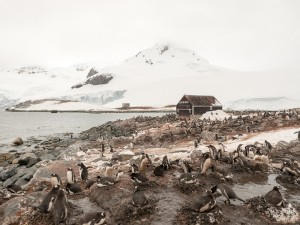 Surreal Landscape: Penguins at Waterboat Point. © 2014 Avid Travel Media Inc.