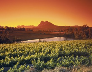 Vineyards at Paarl
