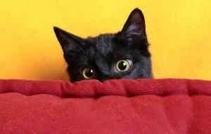 Black-Cat-Peek-a-boo
