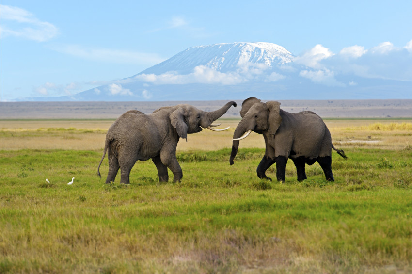 Explore The National Parks Of Kenya And Tanzania With Sita World Tours Travelresearchonline