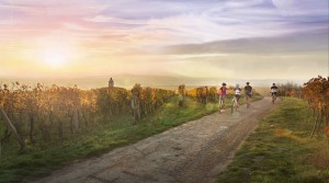 Wine Region In Moravi - CzechTourism