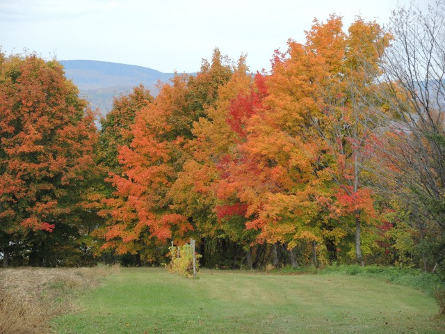 The full majesty of autumn colors on the Ile d'Orleans north of Quebec City