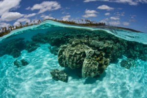A view of the underwater coral off the coast of the Loyalty Islands