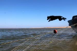 Conrad-Algarve-Water-Dog-300x200