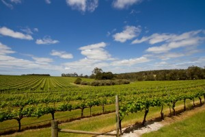 One of the many wineries at Margaret River