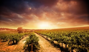 The sun setting on a winery in Barossa Valley