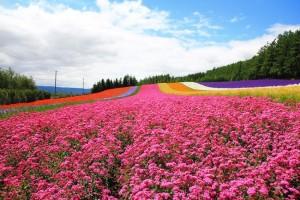 The Shikisai no Oka fields in Furano, Hokkaido