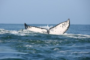 Whale watching off San Blas
