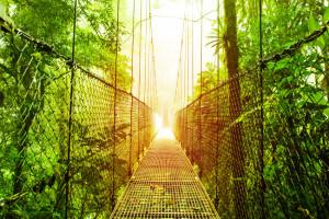 A hanging bridge found within Mistico park.