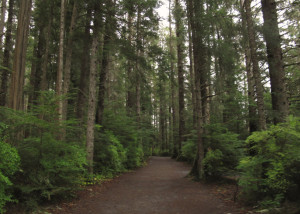 Trail through the Forest at Sitka National Historical Park, Sitka, Alaska.