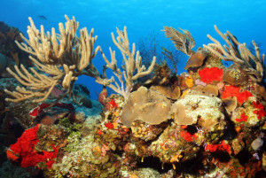Colorful Corals against Blue Water and Surface, Cozumel, Mexico