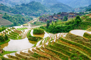 Guilin, China hillside rice terraces landscape
